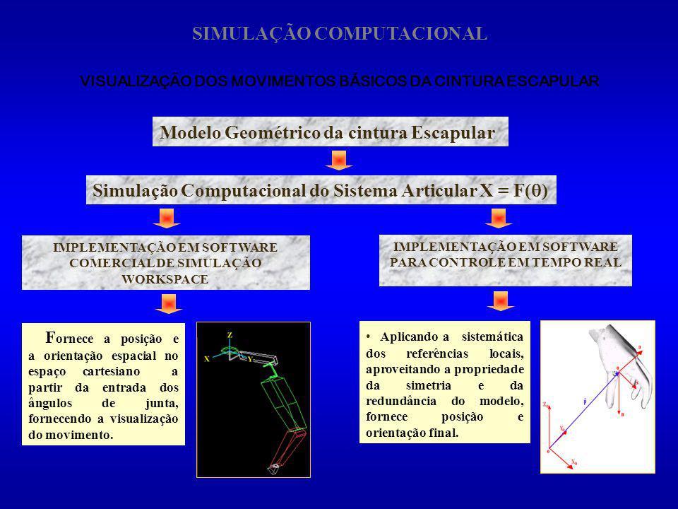 VISUALIZAÇÃO DOS MOVIMENTOS BÁSICOS DA CINTURA ESCAPULAR Simulação Computacional do Sistema Articular X = F( ) Modelo Geométrico da cintura Escapular