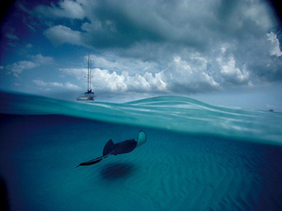 D a v i d D o u b i l e t Nasceu em 1946 e começou a mergulhar em apnéia aos 8 anos. Aos 13 já fotografava ao largo da costa de Nova Jersey. Publicou
