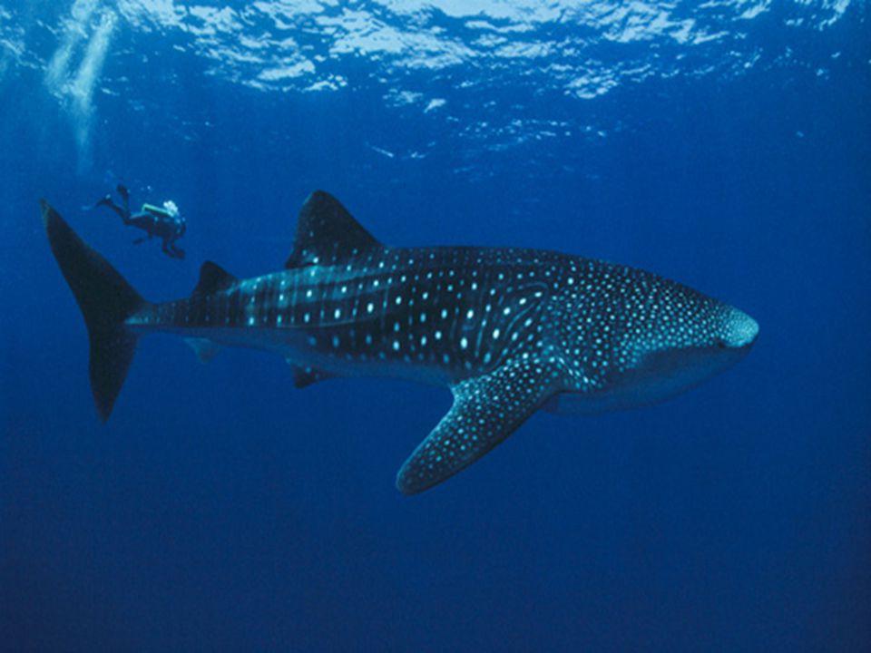 Doubilet recebeu o seu primeiro prémio - na Underwater Sara Prize atribuído pela revista italiana Mundo Submerso e menções honrosas da Américan Nation