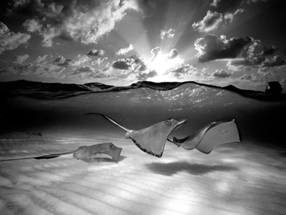 Mais de 15 mil pessoas visitaram a Exposição de Fotografia Subaquática de David Doubilet no Oceanário de Lisboa em 2003.