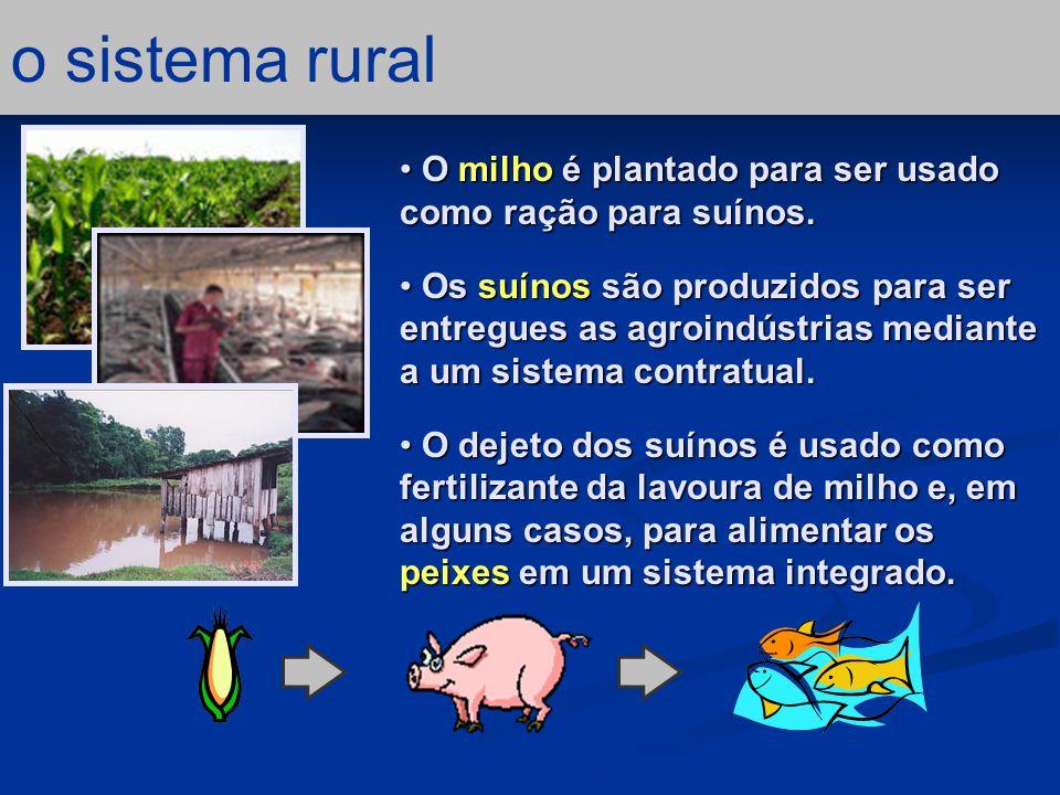 Os insumos comprados para ração (milho, farelo de soja e Mix) foram as contribuições mais importantes em termos de emergia; 64.9% da emergia total usada.