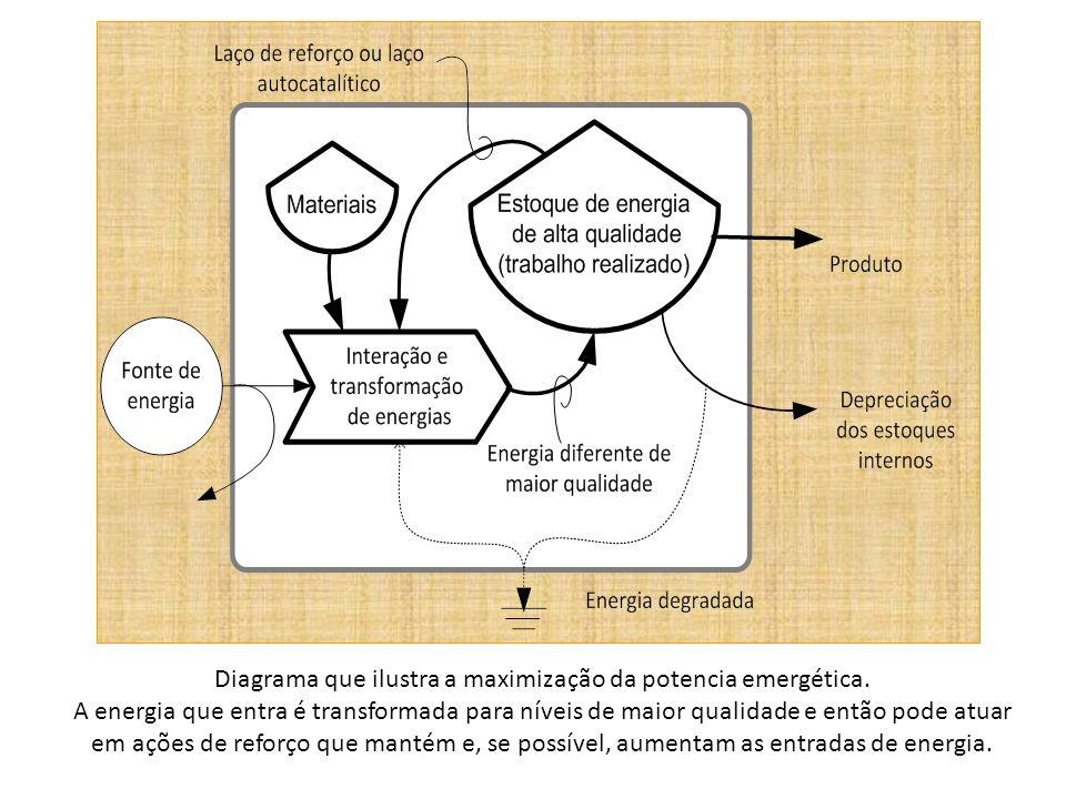 A rede de energia mostra como o sistema se auto-organiza para aproveitar a energia disponível por meio da organização de uma estruturada hierárquica.