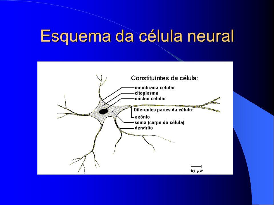 Esquema da célula neural