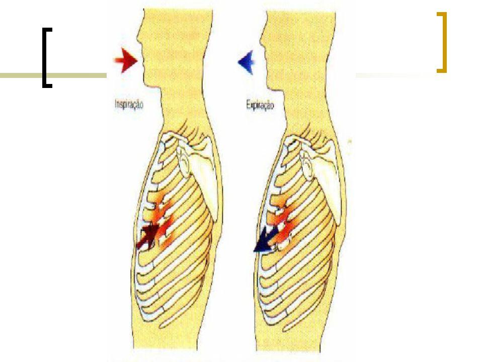 Circulation - Circulação Estado de consciência Cor da pele Freqüência cardíaca Hemorragias visíveis