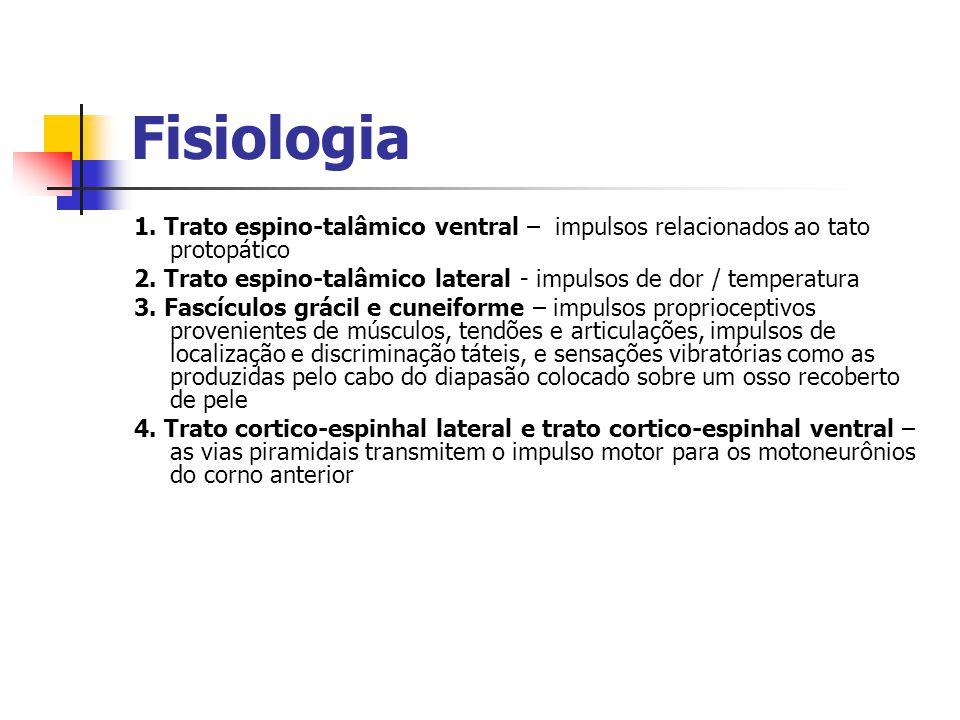 Fisiologia 1. Trato espino-talâmico ventral – impulsos relacionados ao tato protopático 2. Trato espino-talâmico lateral - impulsos de dor / temperatu