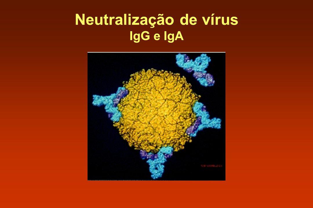 Neutralização de vírus IgG e IgA