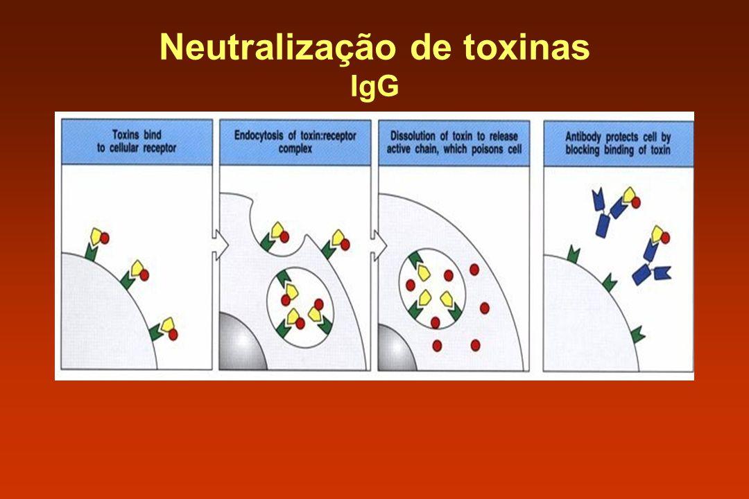 Neutralização de toxinas IgG