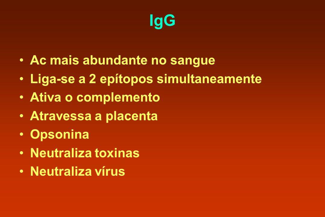IgG Ac mais abundante no sangue Liga-se a 2 epítopos simultaneamente Ativa o complemento Atravessa a placenta Opsonina Neutraliza toxinas Neutraliza v