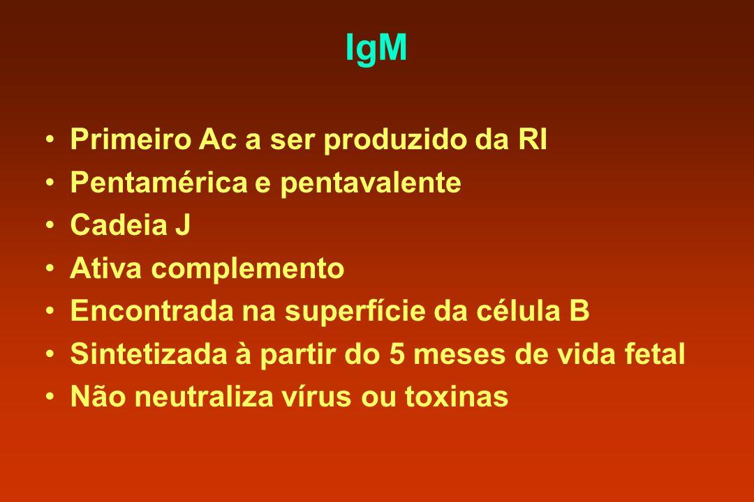IgM Primeiro Ac a ser produzido da RI Pentamérica e pentavalente Cadeia J Ativa complemento Encontrada na superfície da célula B Sintetizada à partir