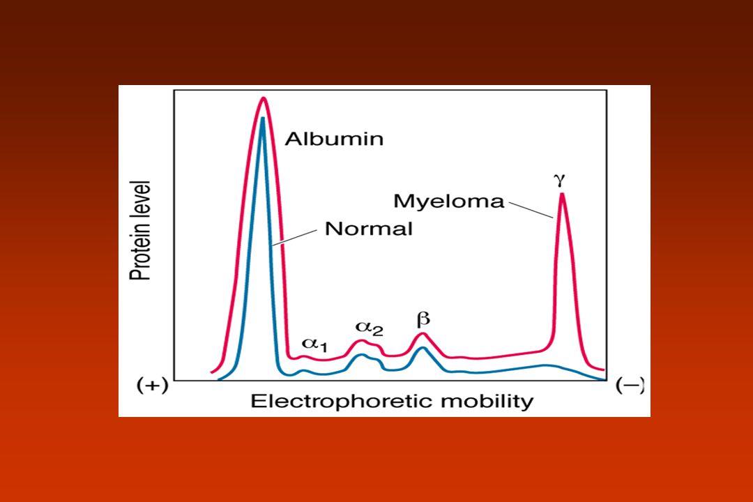 IgM Primeiro Ac a ser produzido da RI Pentamérica e pentavalente Cadeia J Ativa complemento Encontrada na superfície da célula B Sintetizada à partir do 5 meses de vida fetal Não neutraliza vírus ou toxinas