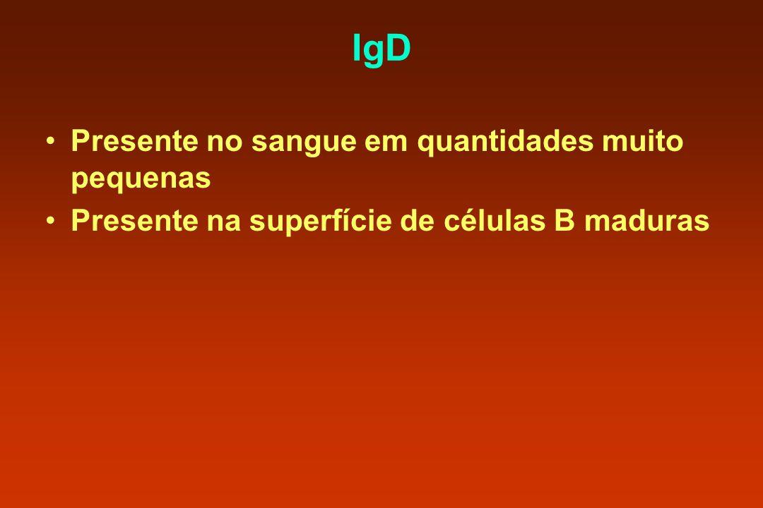 IgD Presente no sangue em quantidades muito pequenas Presente na superfície de células B maduras