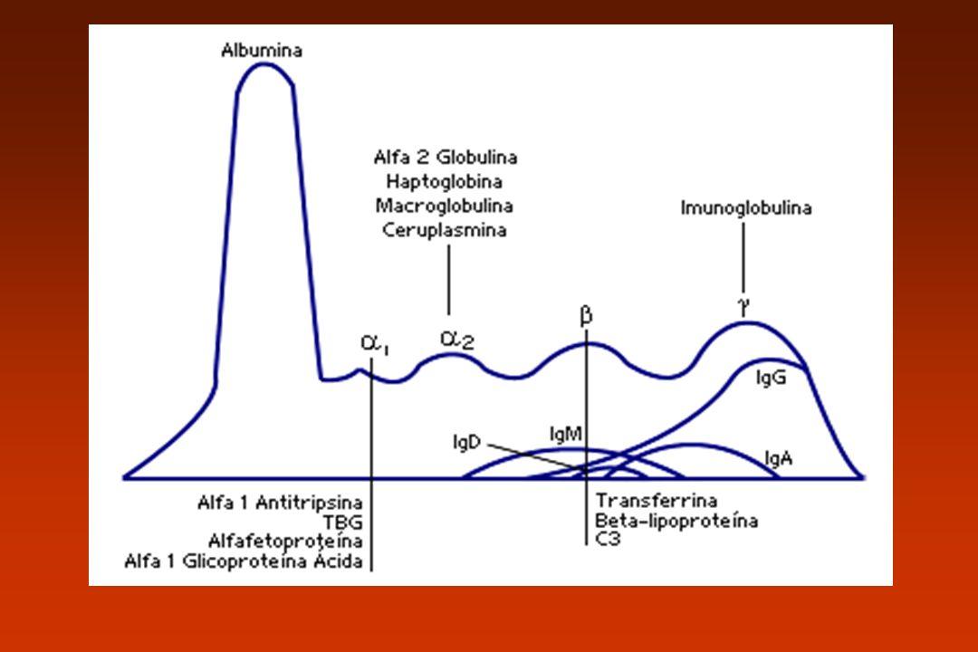 IgA Presente nas secreções –Saliva, muco, suco gástrico, lágrima, colostro e leite IgA sérica e IgA secretória IgAs: cadeia J Neutraliza vírus
