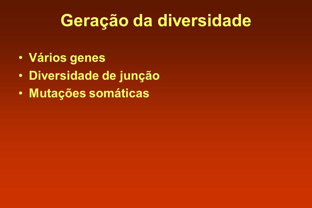Geração da diversidade Vários genes Diversidade de junção Mutações somáticas