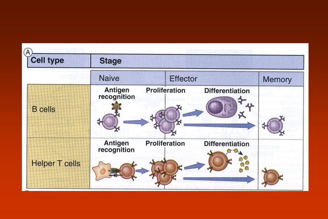 Receptores de linfócitos