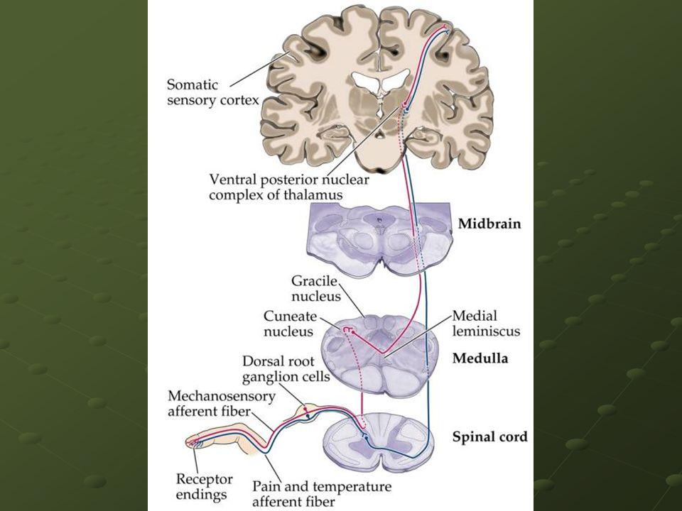 Alodínea Conceito da IASP Dor provocada por um estímulo normalmente não doloroso.