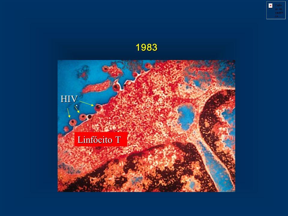 1983 HIV Linfócito T