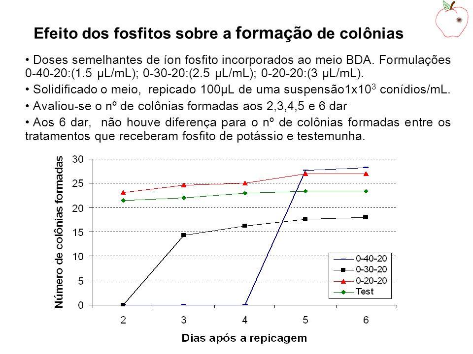 Efeito dos fosfitos sobre a formação de colônias Doses semelhantes de íon fosfito incorporados ao meio BDA.