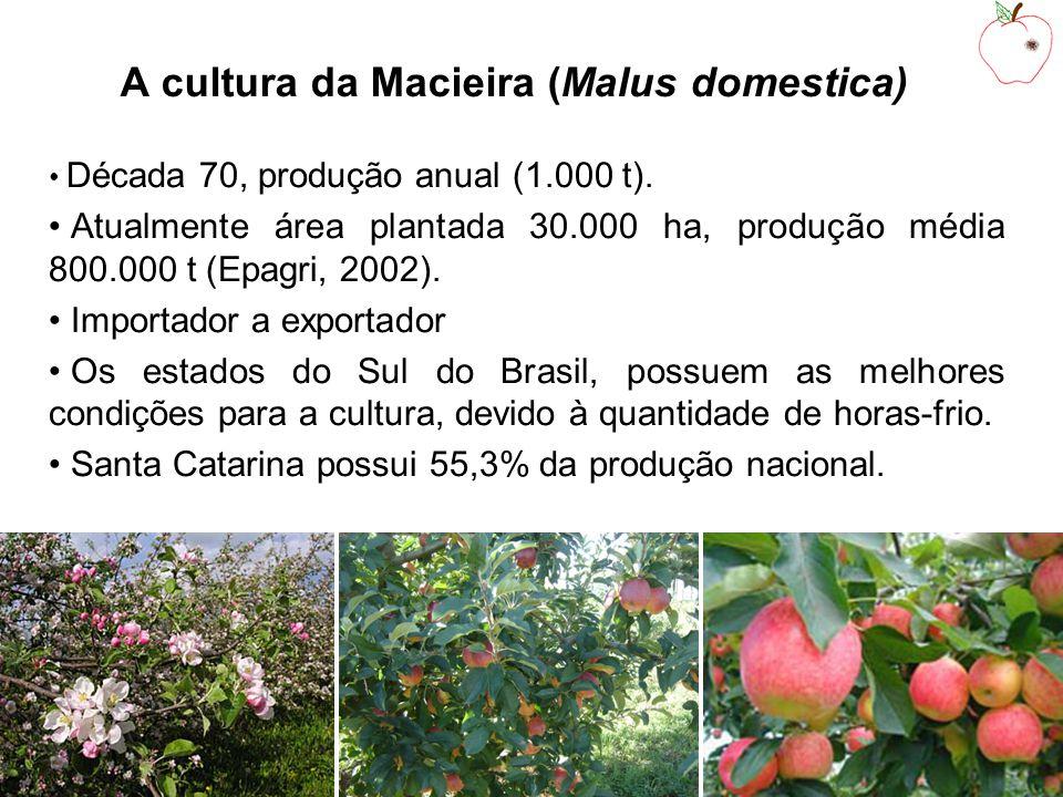 A cultura da Macieira (Malus domestica) Década 70, produção anual (1.000 t).
