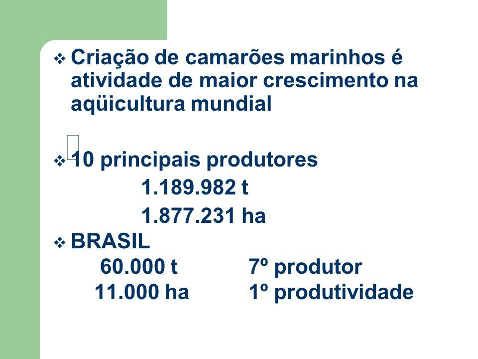 Criação de camarões marinhos é atividade de maior crescimento na aqüicultura mundial 10 principais produtores 1.189.982 t 1.877.231 ha BRASIL 60.000 t 7º produtor 11.000 ha 1º produtividade
