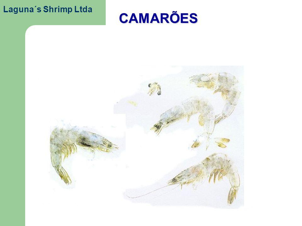 CAMARÕES Laguna´s Shrimp Ltda