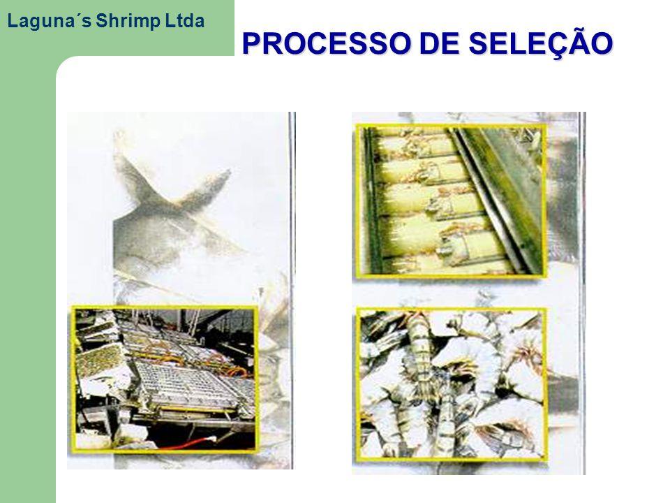 PROCESSO DE SELEÇÃO Laguna´s Shrimp Ltda