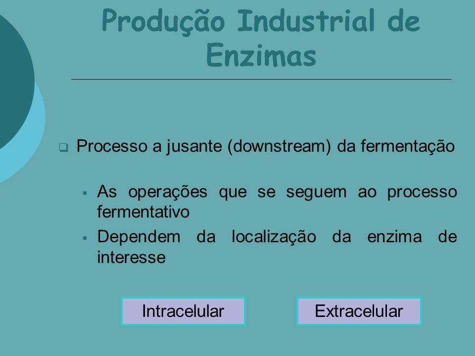 Produção Industrial de Enzimas Processo a jusante (downstream) da fermentação As operações que se seguem ao processo fermentativo Dependem da localiza