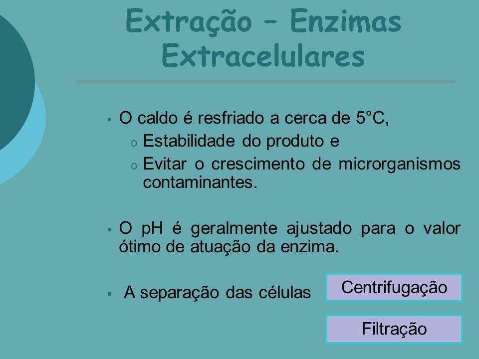 Extração – Enzimas Extracelulares O caldo é resfriado a cerca de 5°C, o Estabilidade do produto e o Evitar o crescimento de microrganismos contaminant