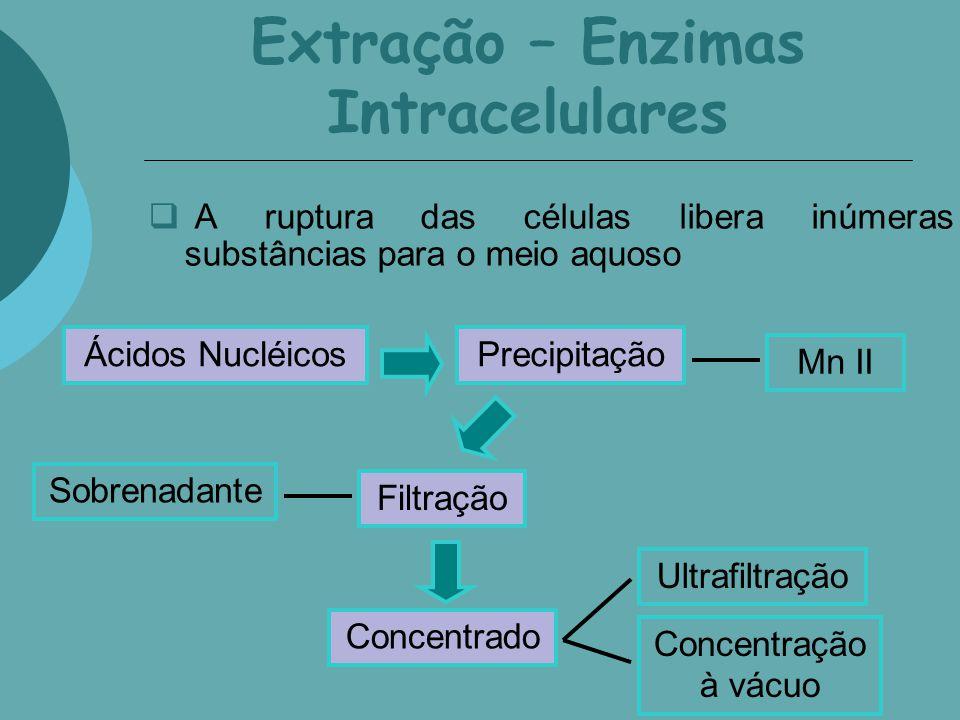 Extração – Enzimas Intracelulares A ruptura das células libera inúmeras substâncias para o meio aquoso Ácidos NucléicosPrecipitação Mn II Filtração So
