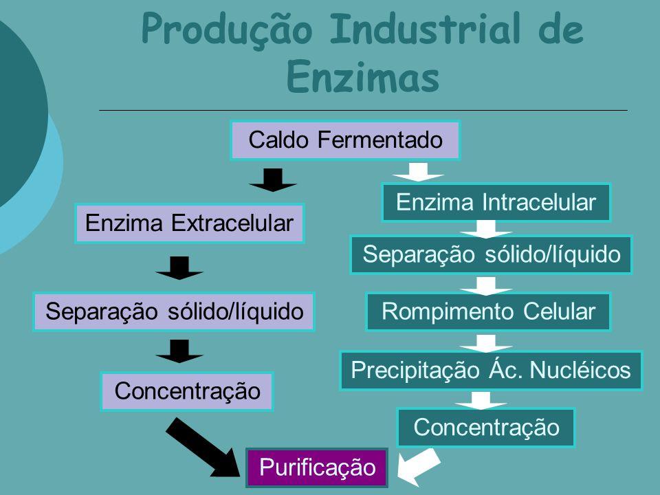Produção Industrial de Enzimas Caldo Fermentado Enzima Extracelular Enzima Intracelular Separação sólido/líquido Concentração Separação sólido/líquido