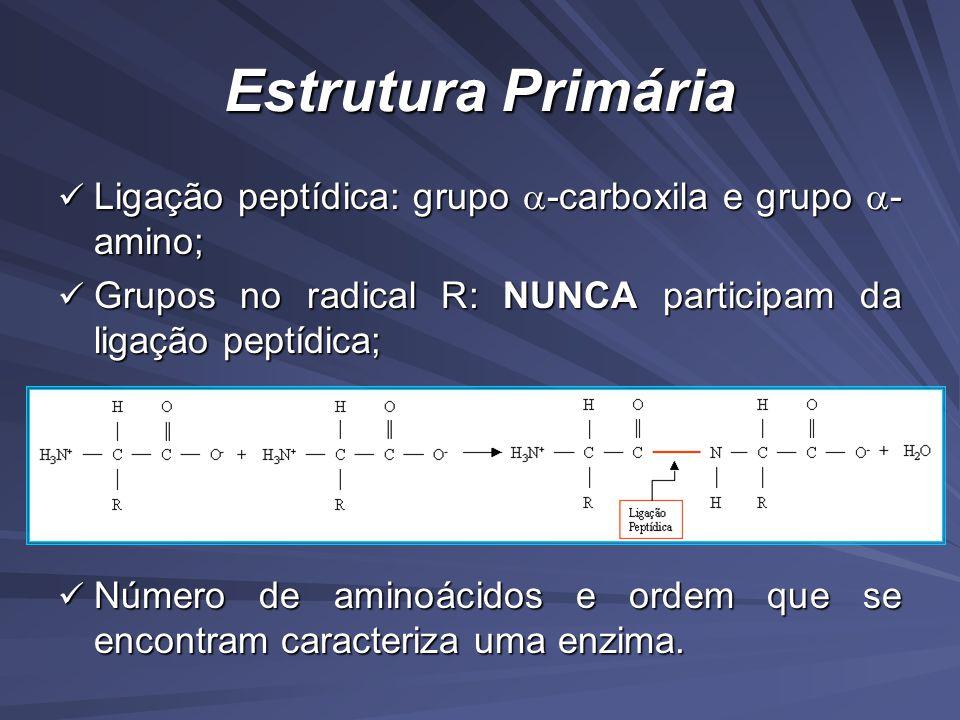Estrutura Primária Ligação peptídica: grupo -carboxila e grupo - amino; Ligação peptídica: grupo -carboxila e grupo - amino; Grupos no radical R: NUNCA participam da ligação peptídica; Grupos no radical R: NUNCA participam da ligação peptídica; Número de aminoácidos e ordem que se encontram caracteriza uma enzima.