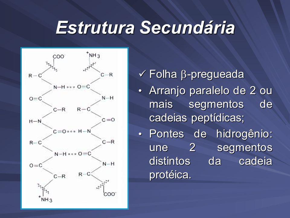 Estrutura Secundária Folha -pregueada Folha -pregueada Arranjo paralelo de 2 ou mais segmentos de cadeias peptídicas; Arranjo paralelo de 2 ou mais segmentos de cadeias peptídicas; Pontes de hidrogênio: une 2 segmentos distintos da cadeia protéica.