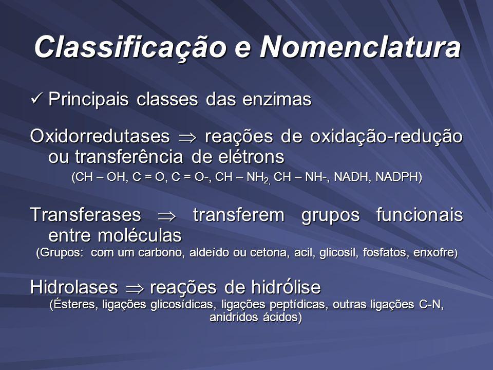 Classificação e Nomenclatura Principais classes das enzimas Principais classes das enzimas Oxidorredutases reações de oxidação-redução ou transferência de elétrons (CH – OH, C = O, C = O-, CH – NH 2, CH – NH-, NADH, NADPH) Transferases transferem grupos funcionais entre moléculas (Grupos: com um carbono, aldeído ou cetona, acil, glicosil, fosfatos, enxofre ) Hidrolases rea ç ões de hidr ó lise (Ésteres, ligações glicosídicas, ligações peptídicas, outras ligações C-N, anidridos ácidos)