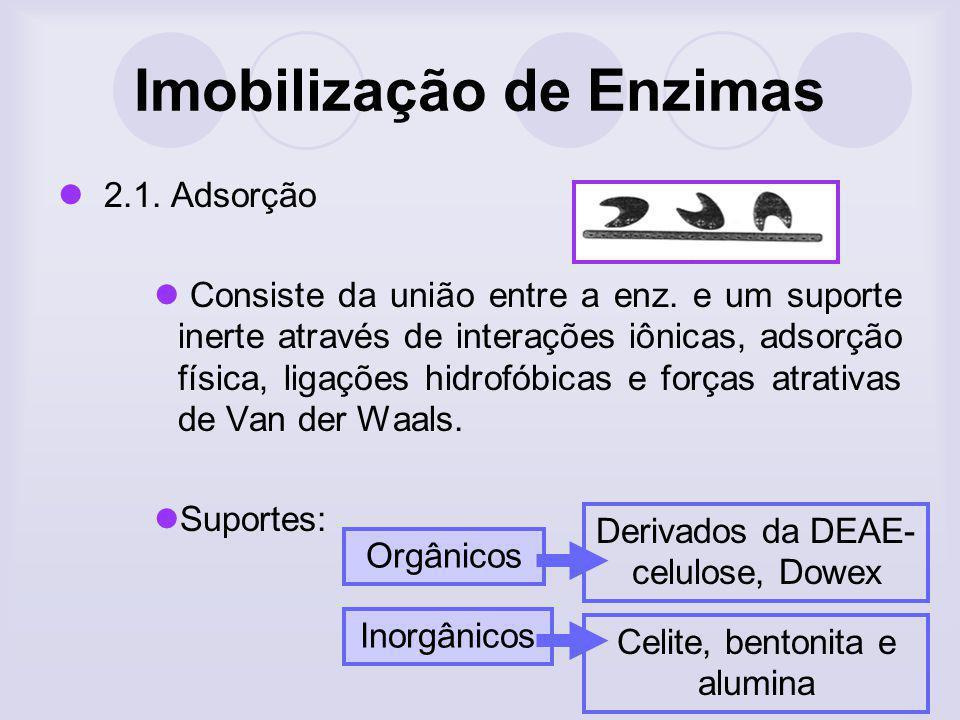 Imobilização de Enzimas 2.1. Adsorção Consiste da união entre a enz. e um suporte inerte através de interações iônicas, adsorção física, ligações hidr