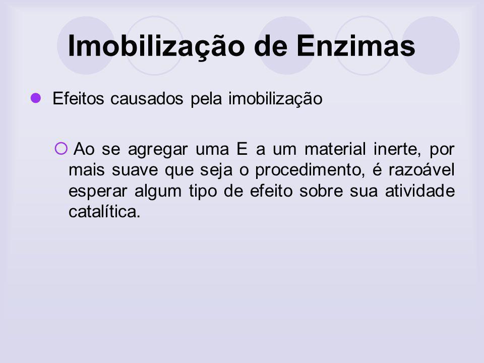 Imobilização de Enzimas Efeitos causados pela imobilização Ao se agregar uma E a um material inerte, por mais suave que seja o procedimento, é razoáve