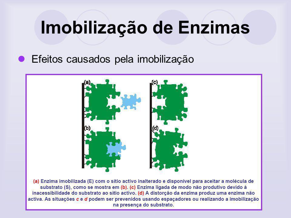 Imobilização de Enzimas Efeitos causados pela imobilização
