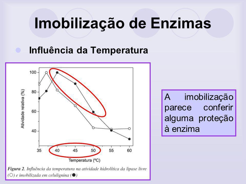 Imobilização de Enzimas Influência da Temperatura A imobilização parece conferir alguma proteção à enzima