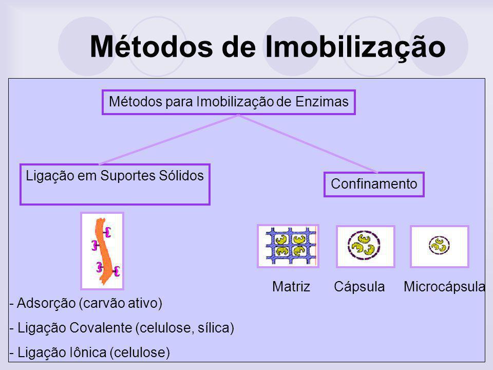 Métodos para Imobilização de Enzimas Confinamento Ligação em Suportes Sólidos - Adsorção (carvão ativo) - Ligação Covalente (celulose, sílica) - Ligaç