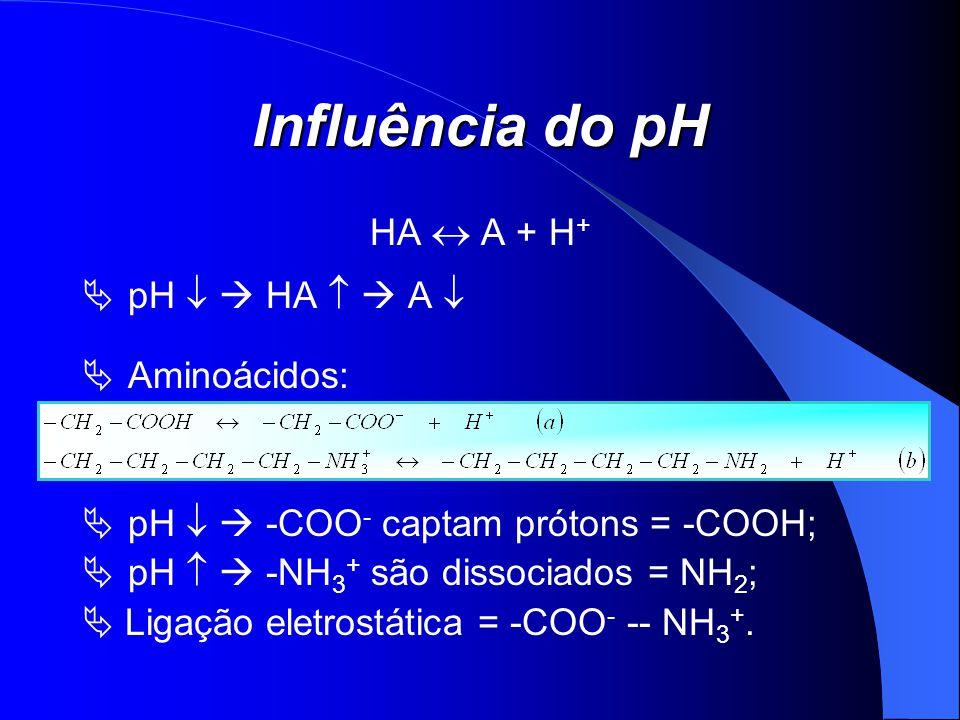 Influência do pH HA A + H + pH HA A Aminoácidos: pH -COO - captam prótons = -COOH; pH -NH 3 + são dissociados = NH 2 ; Ligação eletrostática = -COO -
