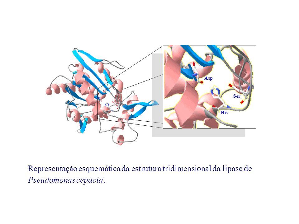Representação esquemática da estrutura tridimensional da lipase de Pseudomonas cepacia. Ser His Asp
