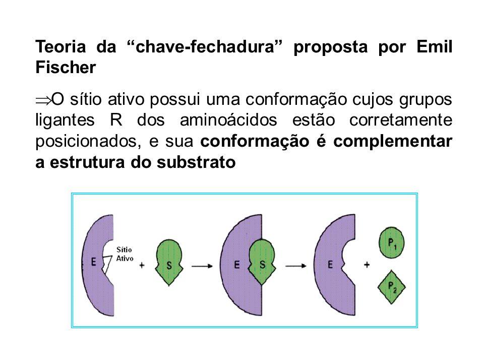 Teoria da chave-fechadura proposta por Emil Fischer O sítio ativo possui uma conformação cujos grupos ligantes R dos aminoácidos estão corretamente po
