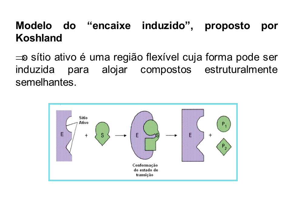Modelo do encaixe induzido, proposto por Koshland o sítio ativo é uma região flexível cuja forma pode ser induzida para alojar compostos estruturalmen