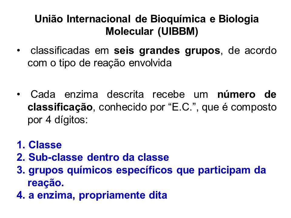 União Internacional de Bioquímica e Biologia Molecular (UIBBM) classificadas em seis grandes grupos, de acordo com o tipo de reação envolvida Cada enz