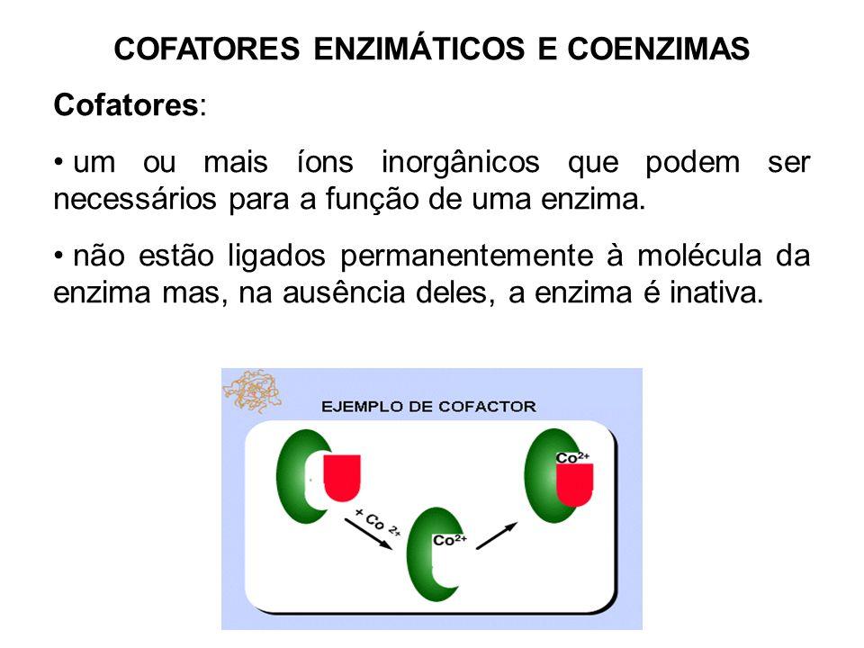 COFATORES ENZIMÁTICOS E COENZIMAS Cofatores: um ou mais íons inorgânicos que podem ser necessários para a função de uma enzima. não estão ligados perm