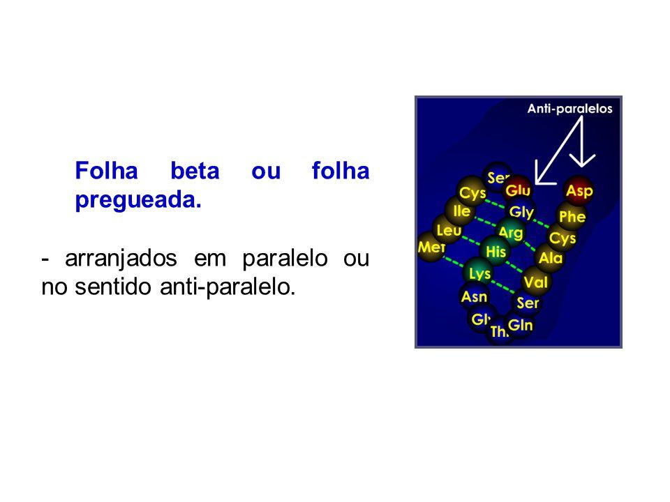 Folha beta ou folha pregueada. - arranjados em paralelo ou no sentido anti-paralelo.