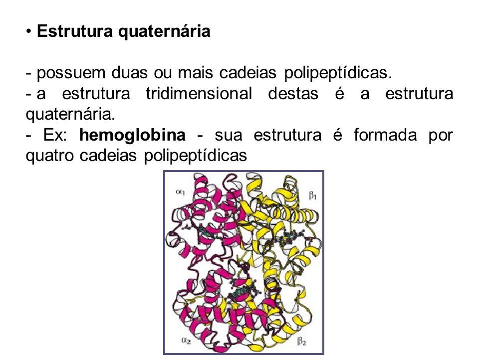 Estrutura quaternária - possuem duas ou mais cadeias polipeptídicas. - a estrutura tridimensional destas é a estrutura quaternária. - Ex: hemoglobina