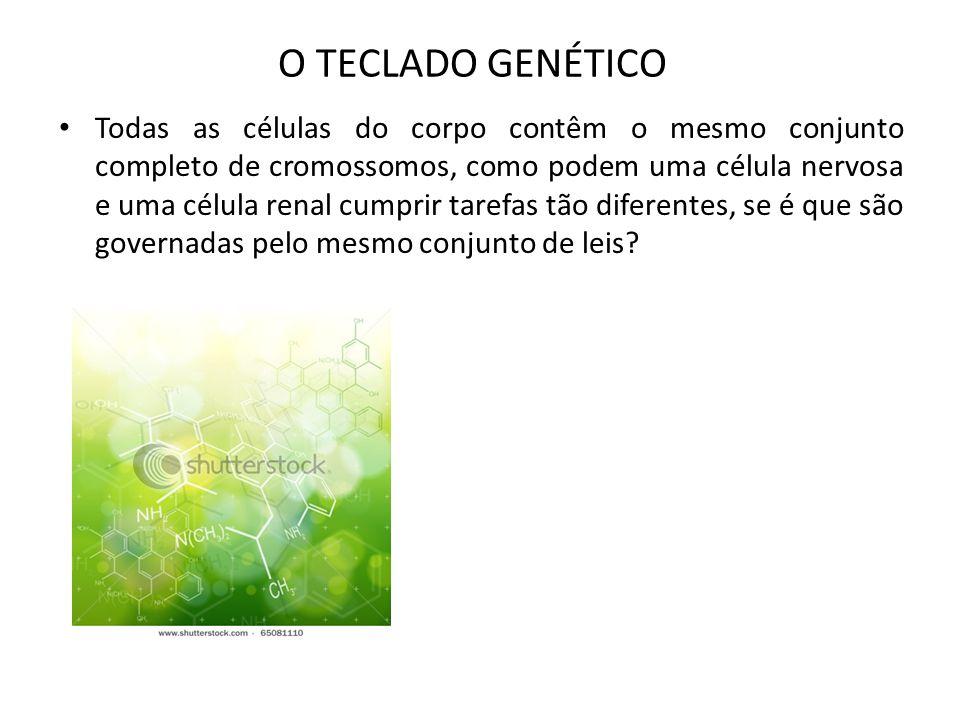 O TECLADO GENÉTICO Todas as células do corpo contêm o mesmo conjunto completo de cromossomos, como podem uma célula nervosa e uma célula renal cumprir