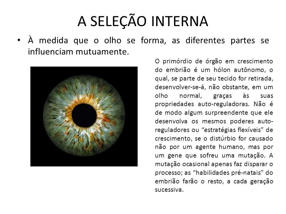 A SELEÇÃO INTERNA À medida que o olho se forma, as diferentes partes se influenciam mutuamente. O primórdio de órgão em crescimento do embrião é um hó