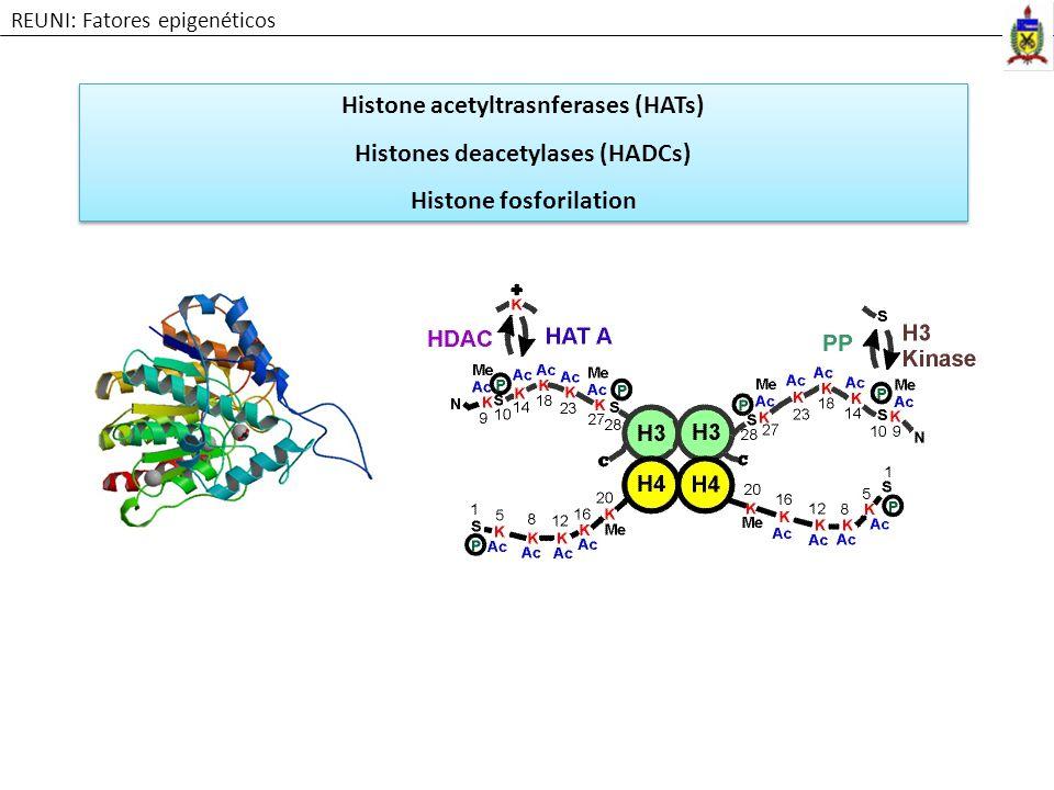 Histone acetyltrasnferases (HATs) Histones deacetylases (HADCs) Histone fosforilation Histone acetyltrasnferases (HATs) Histones deacetylases (HADCs)