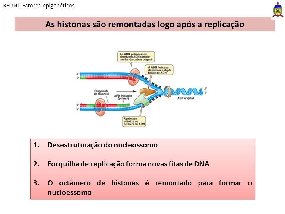 1.Desestruturação do nucleossomo 2.Forquilha de replicação forma novas fitas de DNA 3.O octâmero de histonas é remontado para formar o nucloessomo 1.D