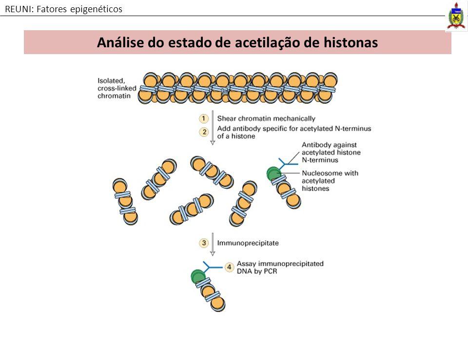 Análise do estado de acetilação de histonas REUNI: Fatores epigenéticos